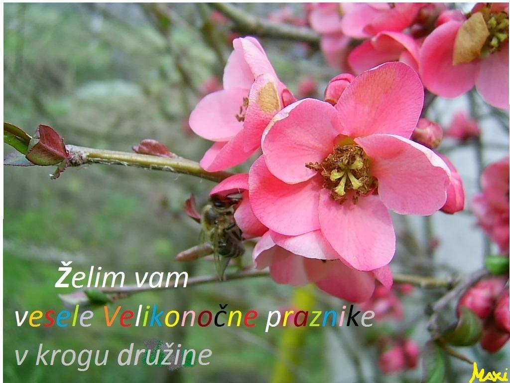 http://shramba.lovrenc.net/maxi/klepet/pic1801.jpg